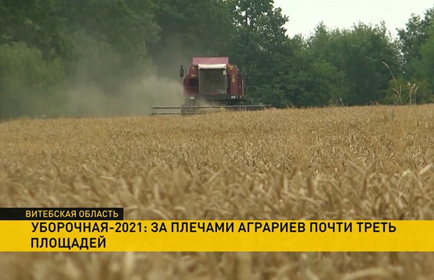 Урожай без потерь: как на полях проходит уборочная кампания
