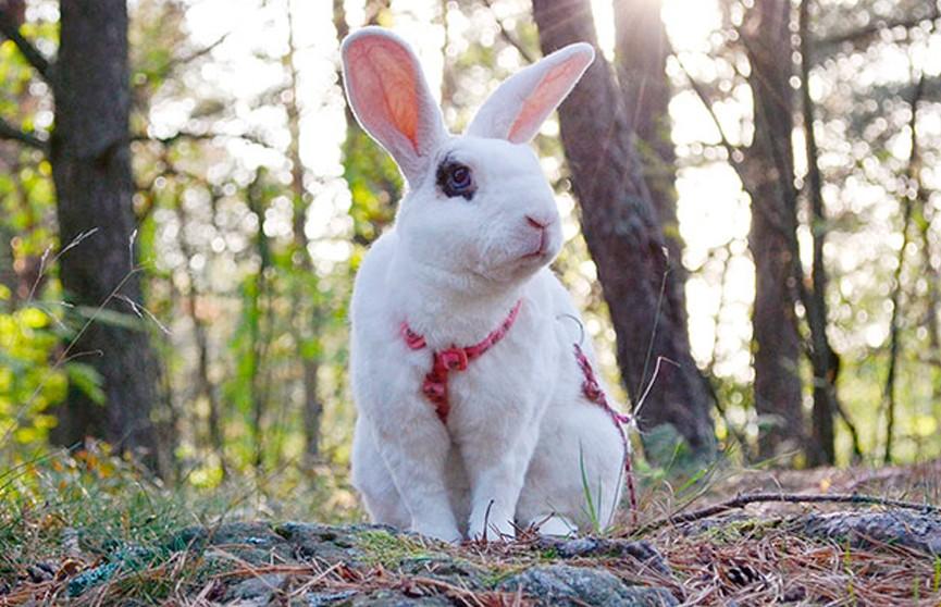 Кролик выполнил 20 трюков за минуту и попал в Книгу рекордов Гиннесса (ВИДЕО)