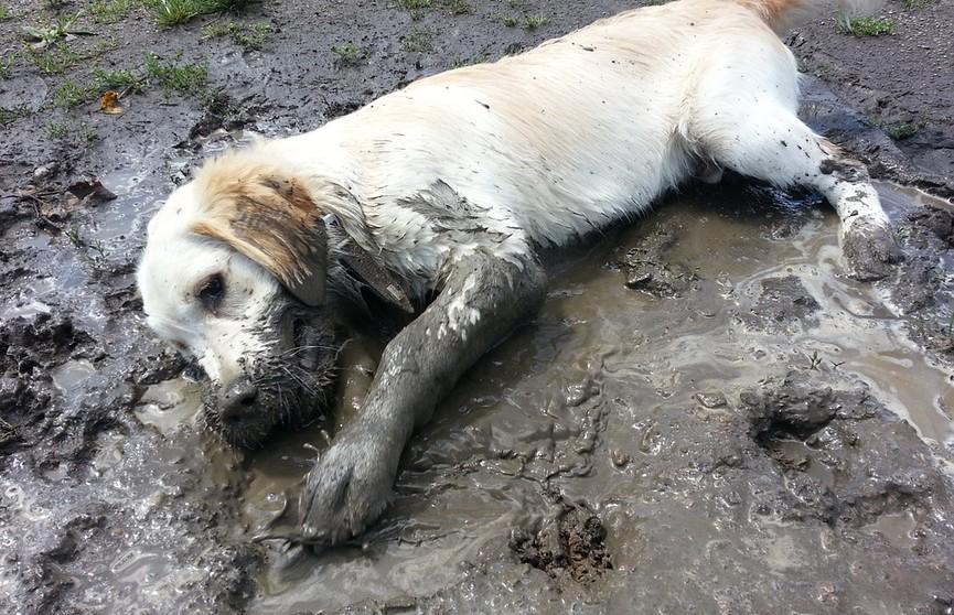 Грязевые ванны раз в неделю: собака показала свое любимое развлечение и рассмешила Сеть