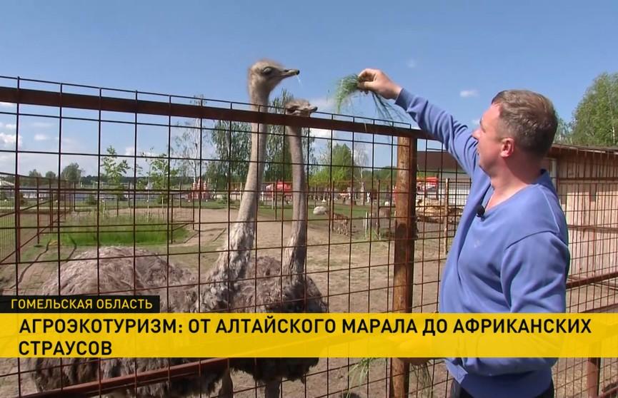 От алтайского марала до африканских страусов: энтузиаст создал экоцентр под Гомелем. Ночлег, рыбалка и прогулки на катамаранах – для посетителей