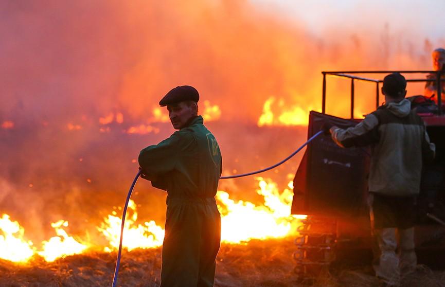 Минлесхоз инициирует запрет на посещение лесов по всей республике из-за сильных пожаров