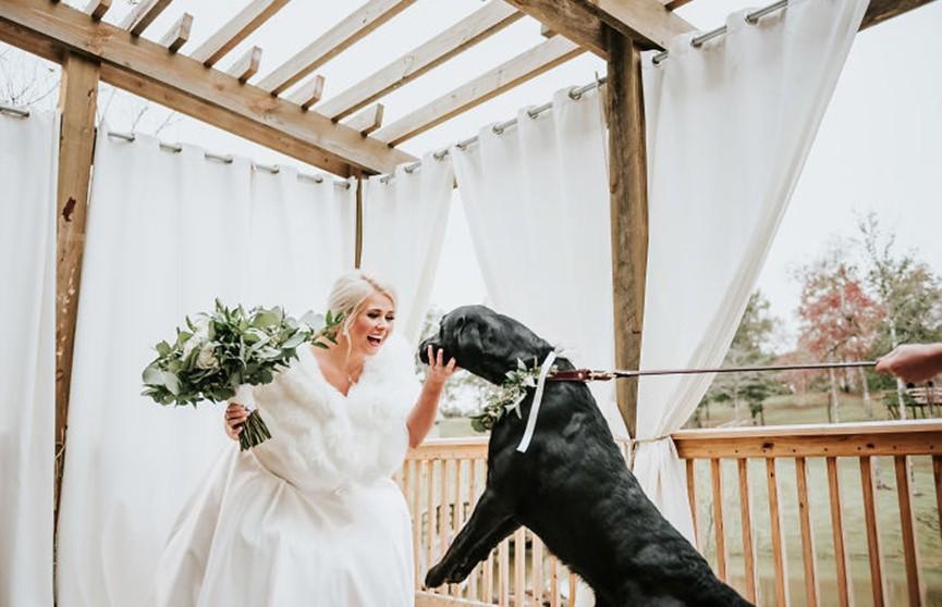 Реакция собаки на хозяйку в свадебном платье растрогала интернет-пользователей