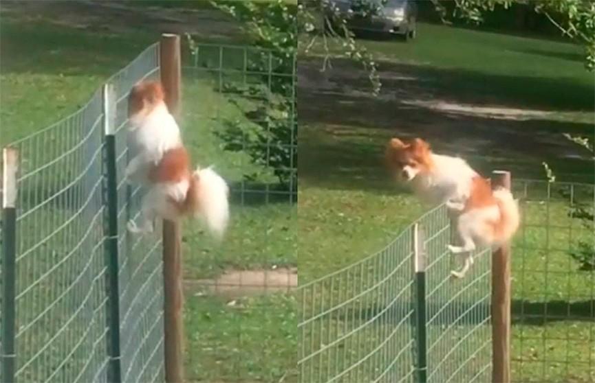 «Я свободен!»: дерзкий побег пса из вольера рассмешил соцсети
