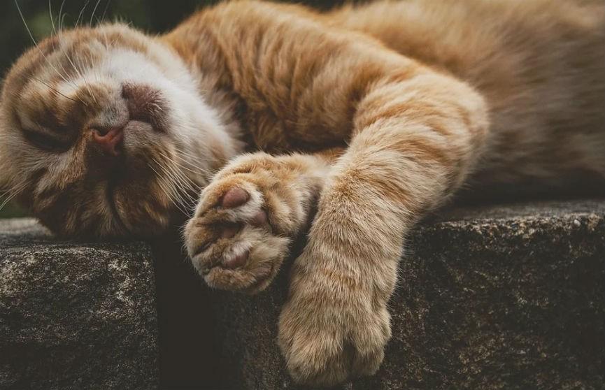 Реакция потерявшегося кота на голос хозяйки растрогала Сети