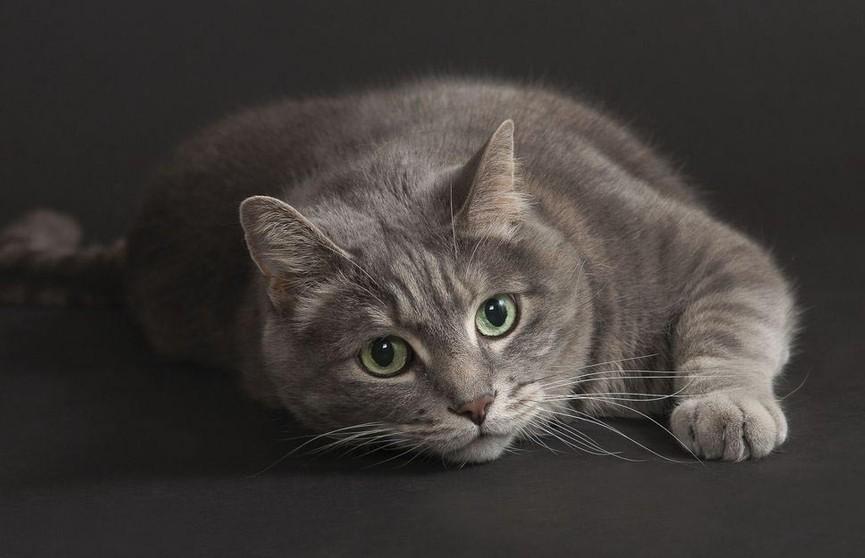 Кошка запуталась в противоречивых чувствах к хозяйке и рассмешила сеть (ВИДЕО)