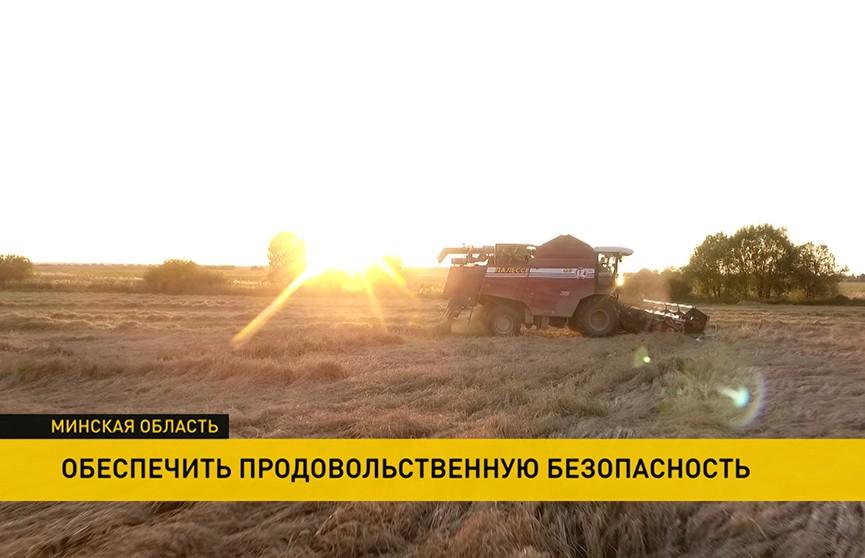 Продовольственная безопасность Беларуси: какой урожай ждать в этом году?