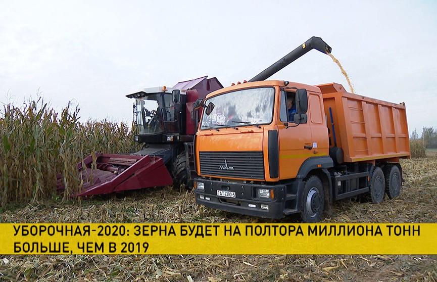 Уборочная-2020: урожай ожидается больше прошлогоднего на 1,5 миллиона тонн