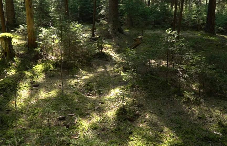 Плещеницы – первый «лесной курорт» Беларуси