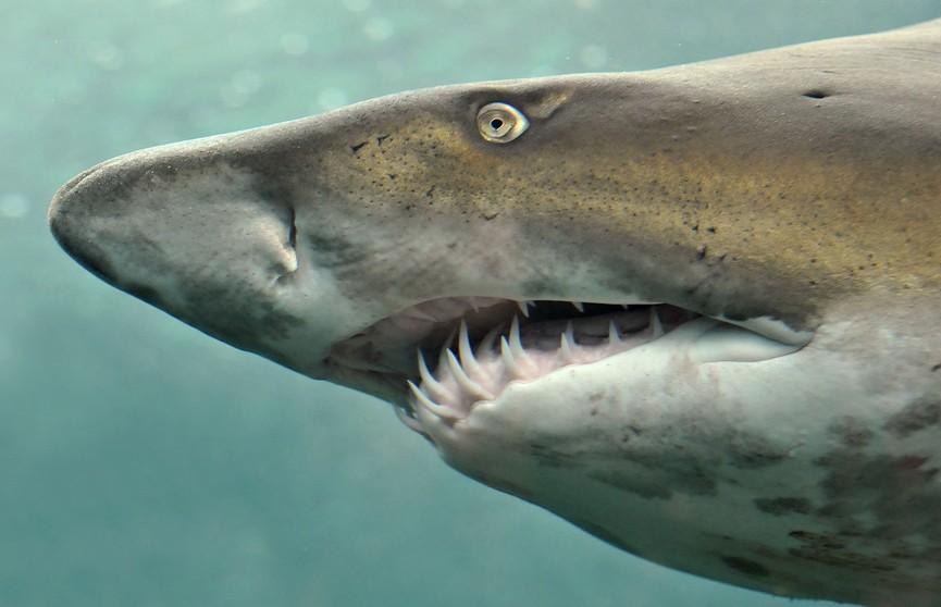 Серферу удалось прогнать акулу, нецензурно выругавшись
