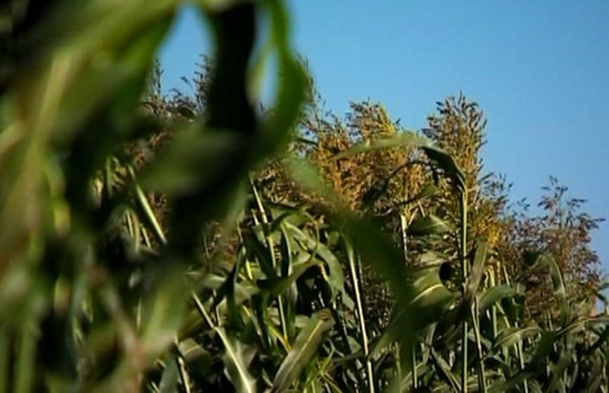 Минсельхозпрод: «Продукции сельского хозяйства в Беларуси будет в достатке»