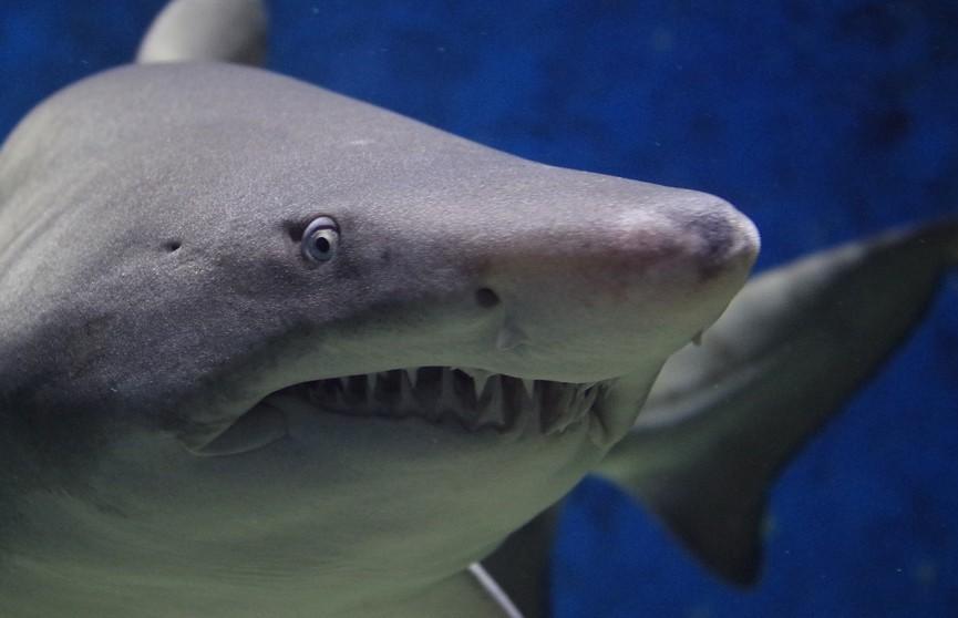 Мужчина погиб в результате нападения акулы у северо-западного побережья Австралии