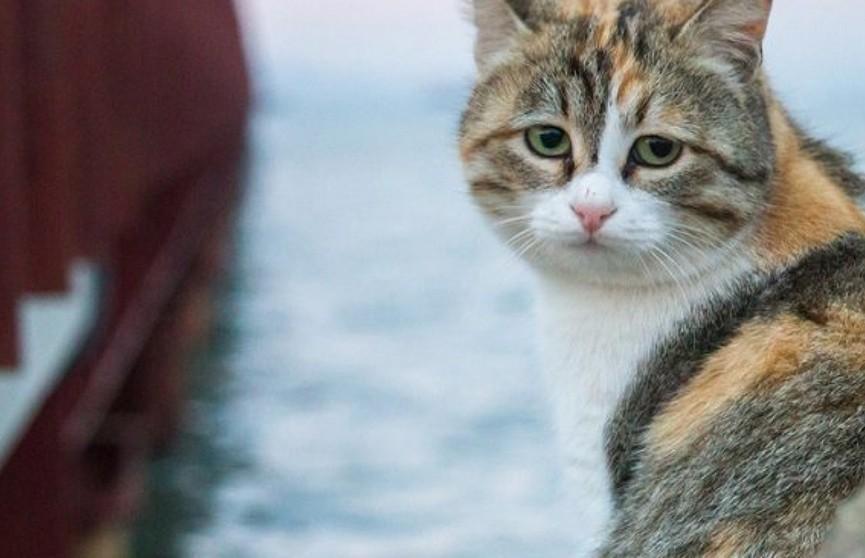 Кошка около недели наблюдала за попытками снять её  с моста и на шестой день выбралась самостоятельно
