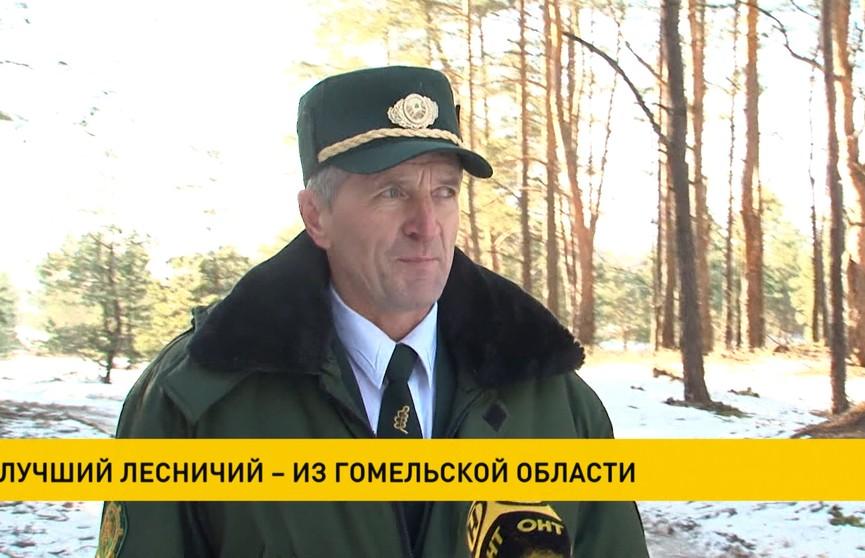 Лучший лесничий – из Гомельской области: трудовой стаж  Виктора Голоса – 30 лет