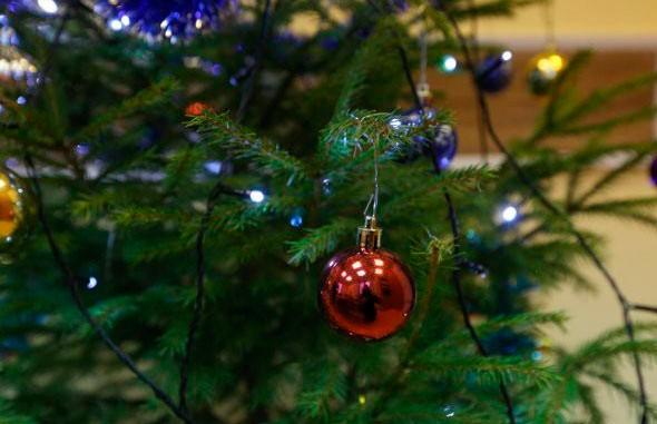 Более 67000 елок уже продано за несколько дней до Нового года