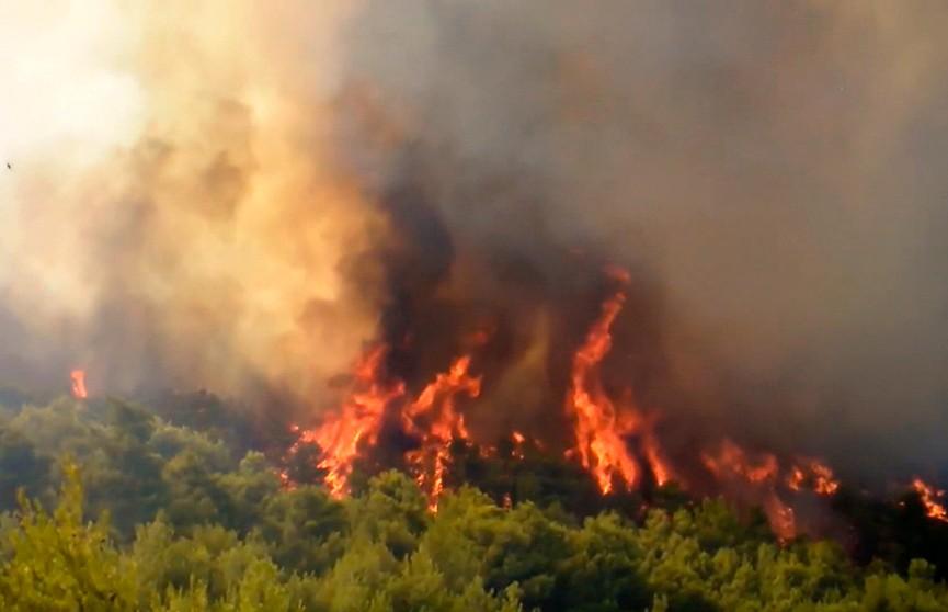 Четыре населённых пункта эвакуированы из-за лесного пожара на греческом острове Эвбея