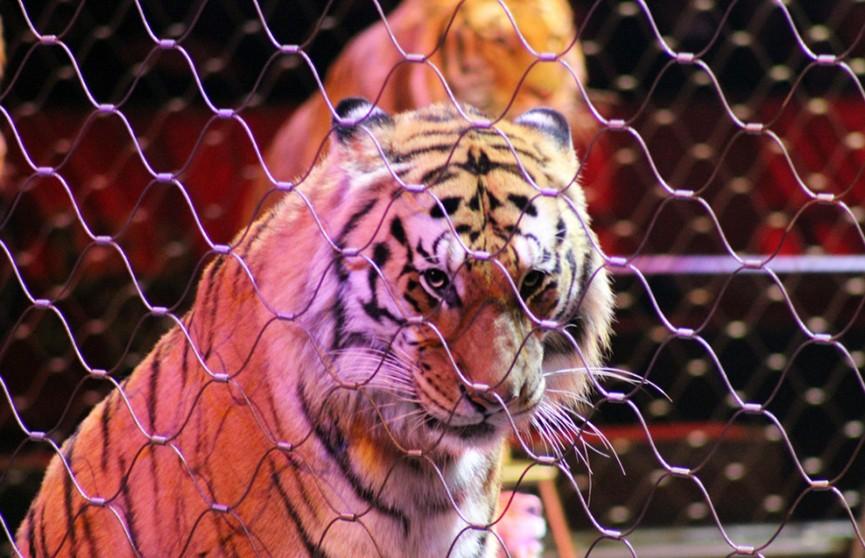 Диких животных запретили использовать в цирках Португалии