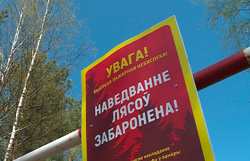 Запрет на посещение лесов продолжает действовать более чем в 20 районах Беларуси