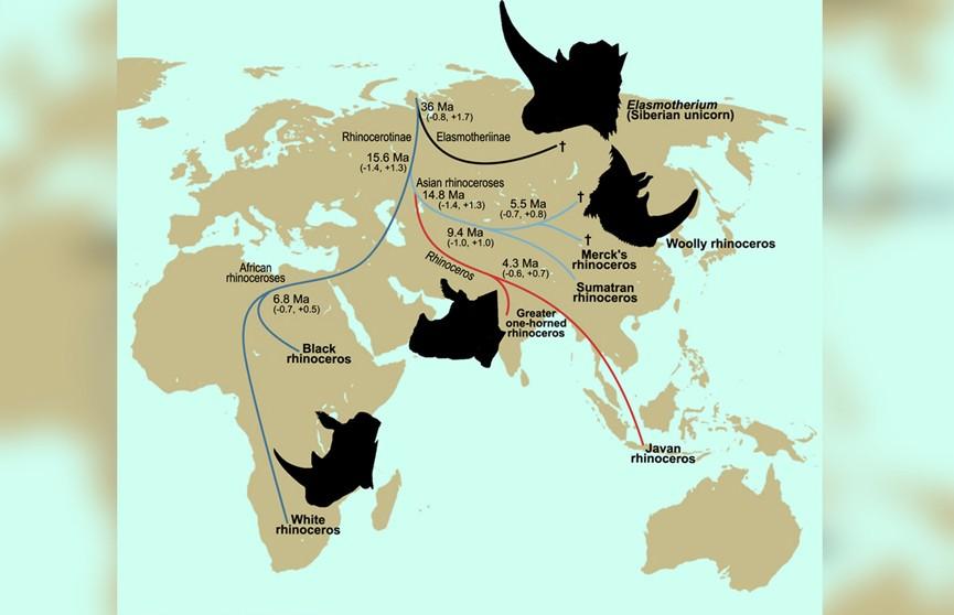 Биологи выяснили, как появились современные носороги
