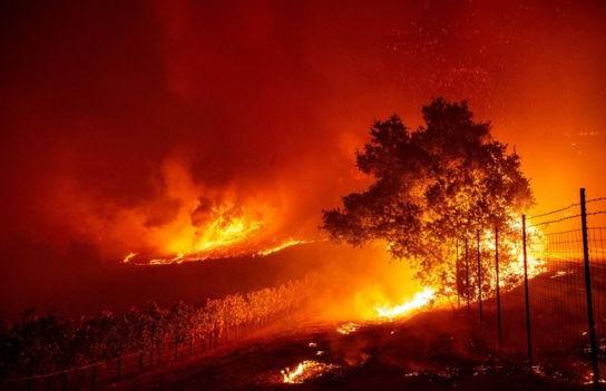 Более 10 тысяч гектаров леса горят в Калифорнии