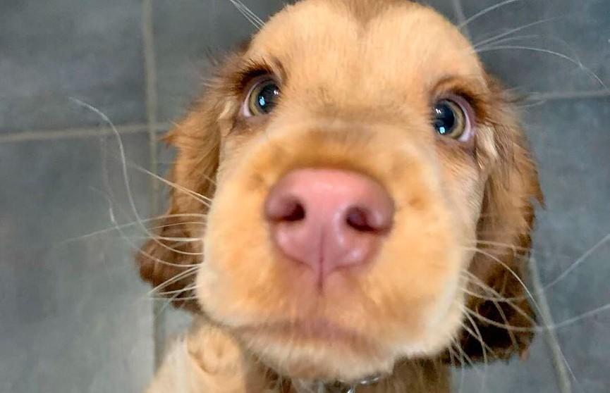 «Эти глаза просто гипнотизируют»: собака прославилась на весь мир из-за невероятных глаз (ФОТО)