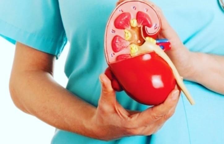 Как избежать болезней почек? Рассказывает врач