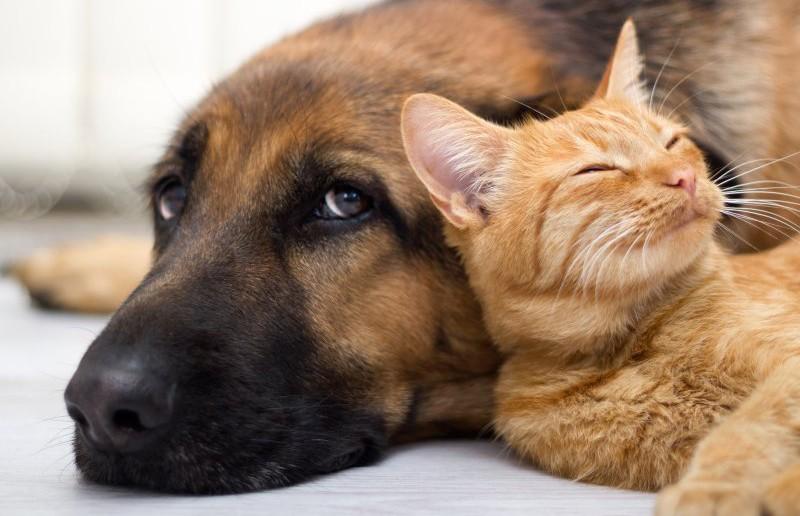 Охраняют дом: кот и пес показали, как работают вместе