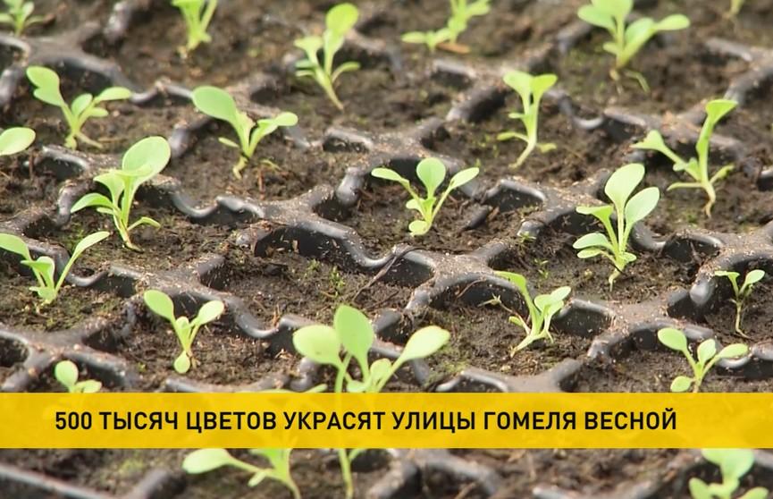 500 тыс. цветов скоро высадят в Гомеле