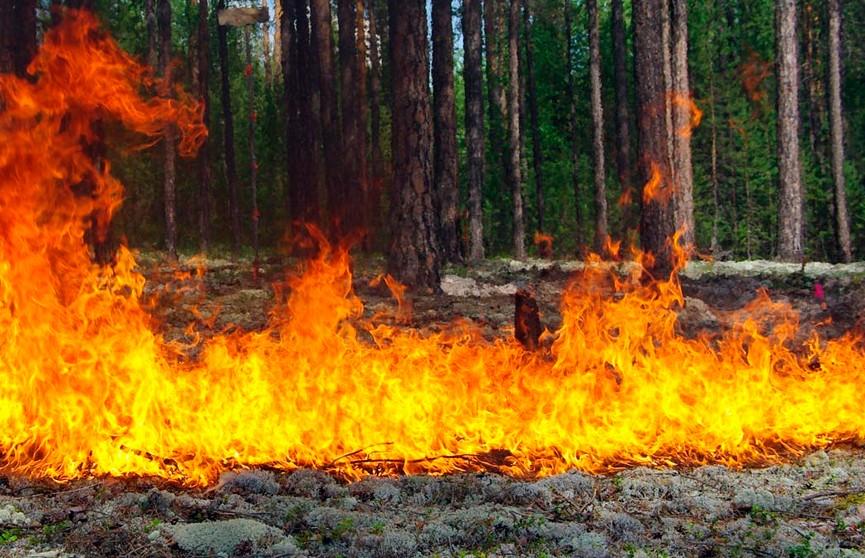 Для посещения закрыты леса в девяти районах Гомельской и Минской областей