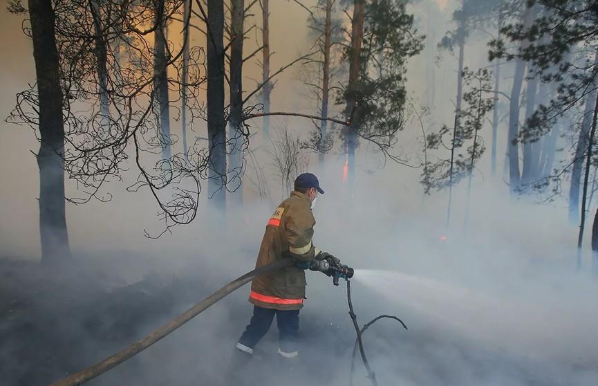 Очаги пожаров и тления вблизи Чернобыльской АЭС полностью ликвидировали