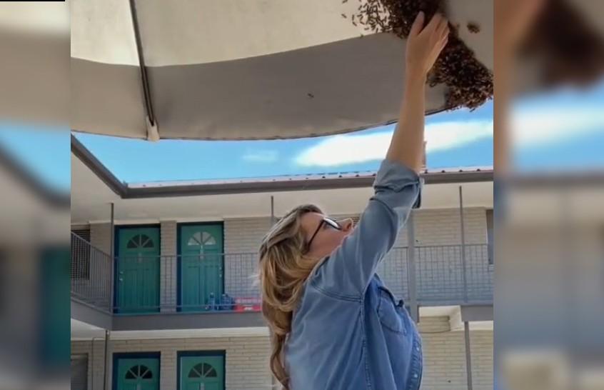 Не может быть! Девушка голыми руками перенесла рой пчел в новый дом (ВИДЕО)