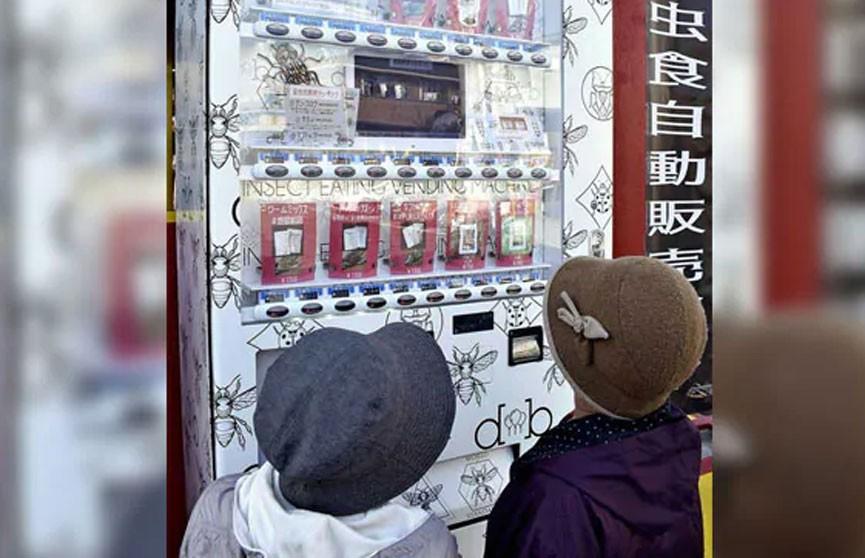 Автомат по продаже сверчков, жуков-носорогов и пауков поставили в Японии