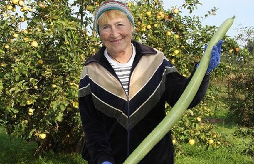 «Змеиный огурец» длиной в один метр вырос в деревне Липники