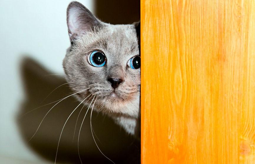 «Вы только посмотрите на его лицо!»: кот с невозмутимым видом столкнул друга в ванну (ВИДЕО)