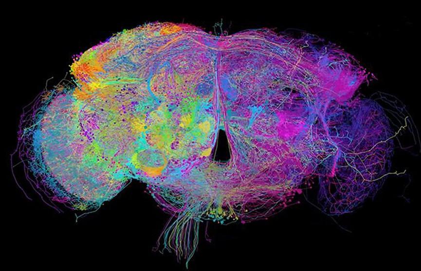 Мозг в 3D. Невероятное трёхмерное изображение создали учёные