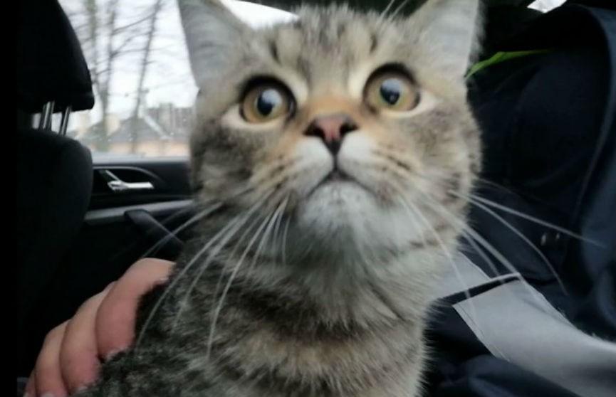 Работники ГАИ спасли кошку, застрявшую в прицепе грузовика