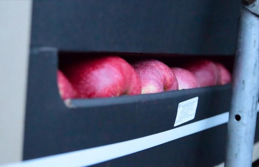 Фокус с яблоками: по документам российская фирма-перевозчик везла кондитерские изделия, а по факту – десятки тонн фруктов