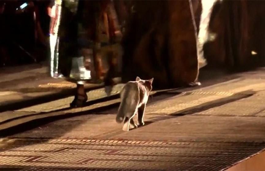 Кошка продефилировала по подиуму во время показа мод в Марракеше