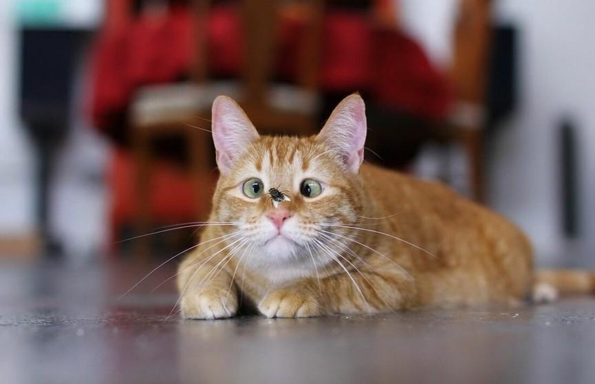 Кот поймал муху на лету и набрал 8 млн просмотров в TikTok. Обязательно посмотрите – это очень забавно!