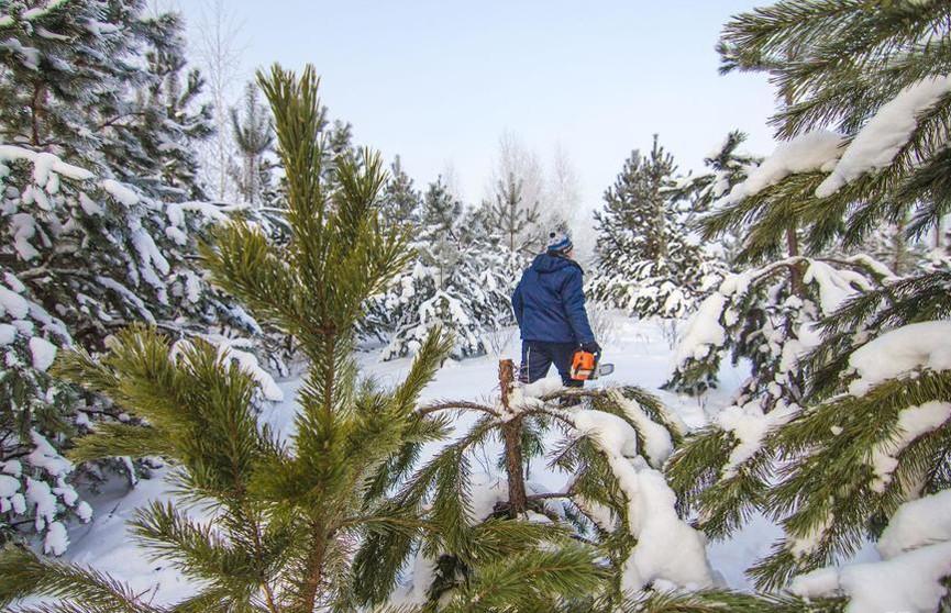 С 18 декабря в Беларуси вводится усиленный режим охраны лесов
