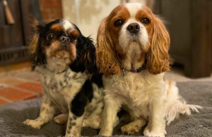 Австралийка сделала КТ и обнаружила на сканах внутренних органов «собаку»