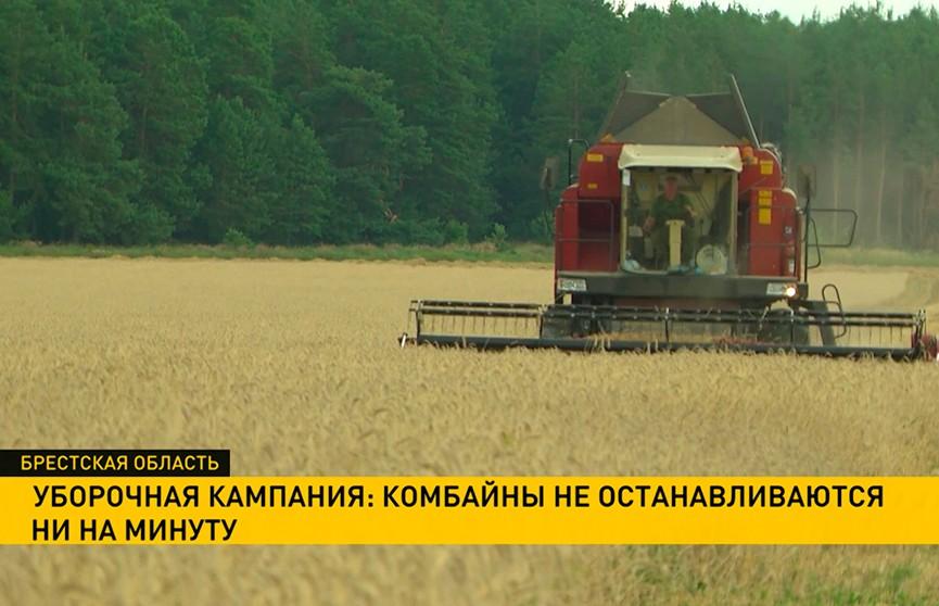 Уборочная кампания в разгаре. Как аграрии поднимают районные хозяйства в рейтинге?
