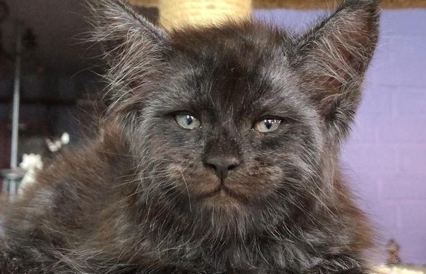 В Подмосковье родился котёнок с «человеческим лицом»