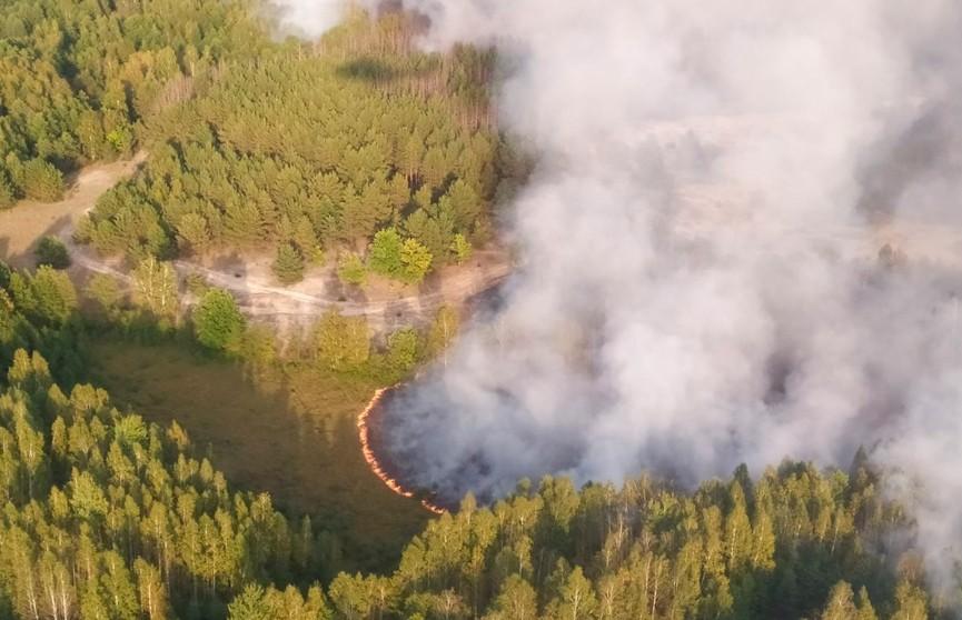 Крупный лесной пожар в Хойникском районе потушен с помощью авиации