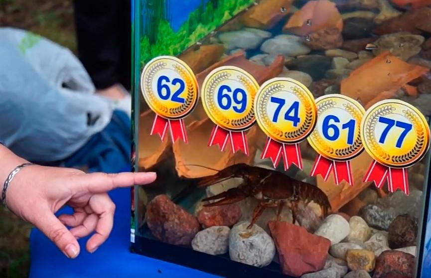 Рак-оракул предсказал итоги медального зачёта II Европейских игр для сборной Беларуси (ВИДЕО)