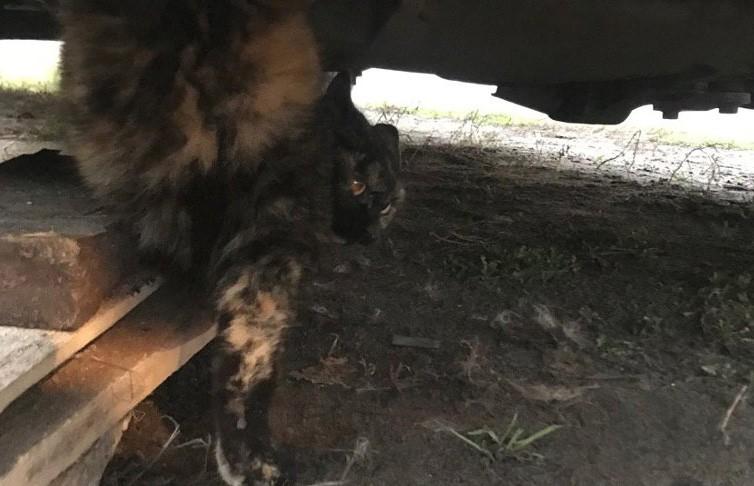 Спасатели вытащили кошку из моторного отсека автомобиля