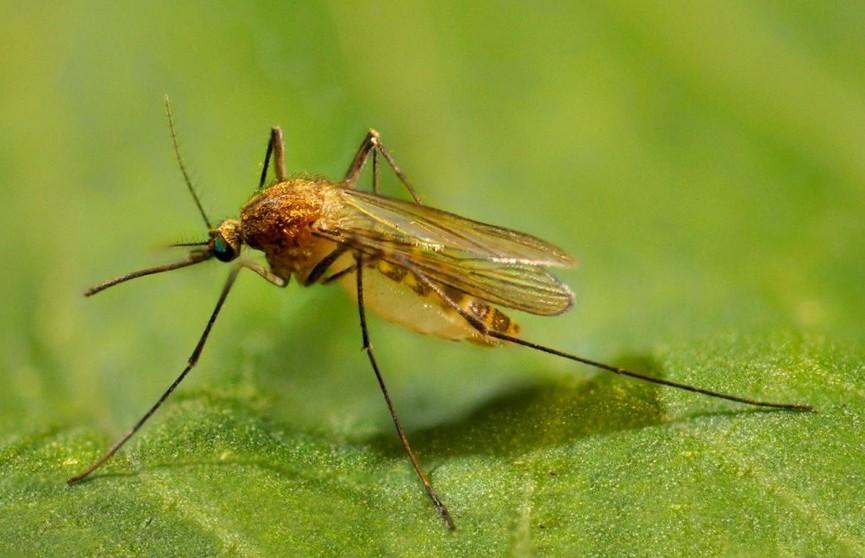 Как избавиться от комаров? Народная хитрость, которая поможет вам избежать укусов надоедливых насекомых!