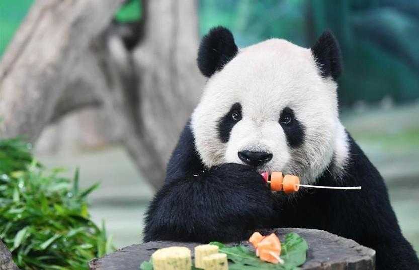 Лунные пряники для больших панд: в парке дикой природы в Хайкоу отмечают Праздник середины осени