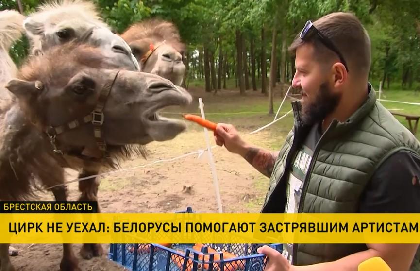 Заложники пандемии: белорусы второй месяц помогают застрявшему без денег цирку