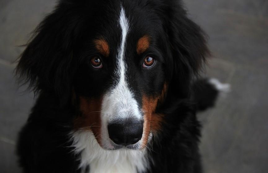 Словит или нет? Вы только посмотрите, как пес доверяет своему человеку! Это слишком мило! (ВИДЕО)