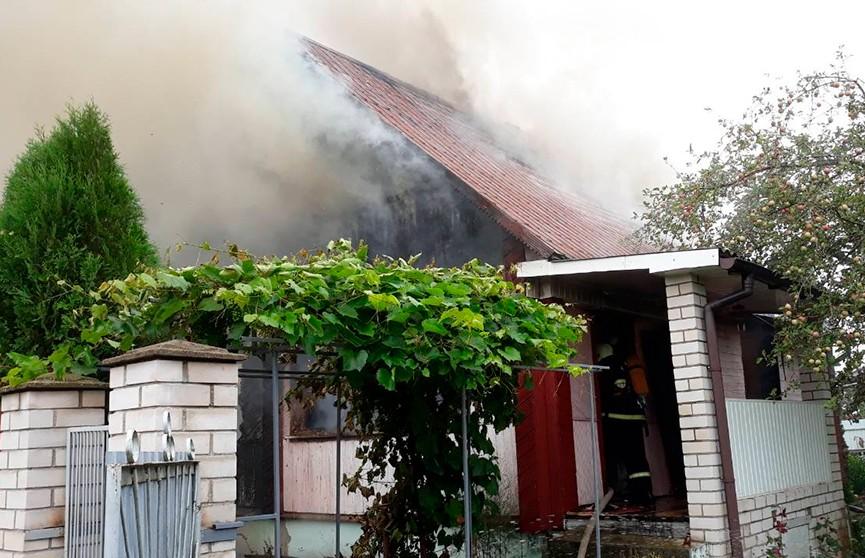 Кошка помогла спастись пенсионерке от пожара на даче